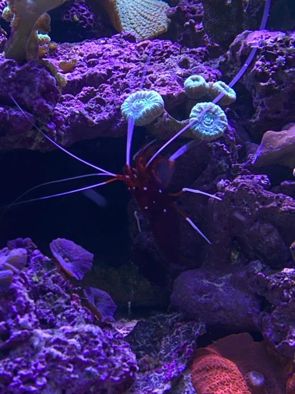 [PHOTO] Aquarium Récifale  Img_2621