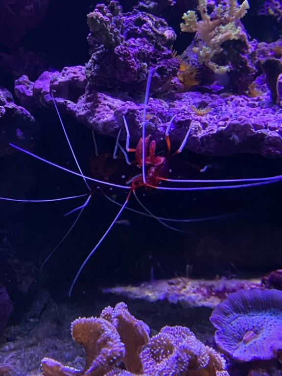 [PHOTO] Aquarium Récifale  Img_2622