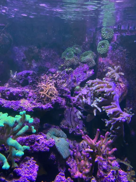 [PHOTO] Aquarium Récifale  Img_2623