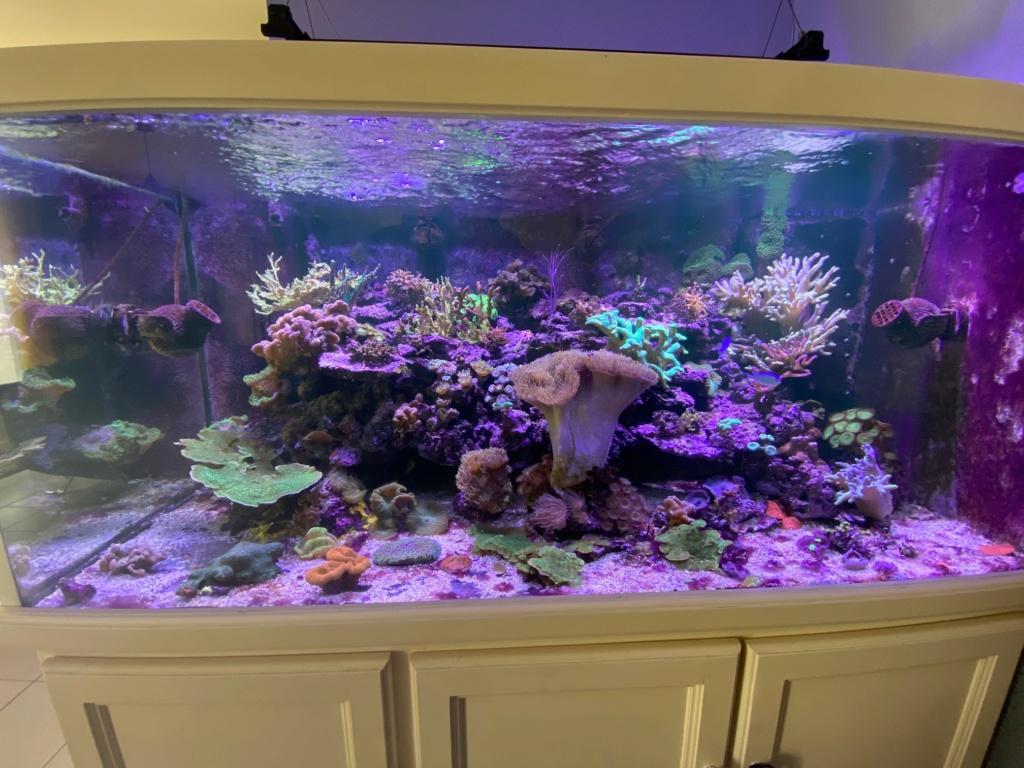 [PHOTO] Aquarium Récifale  Img_2624