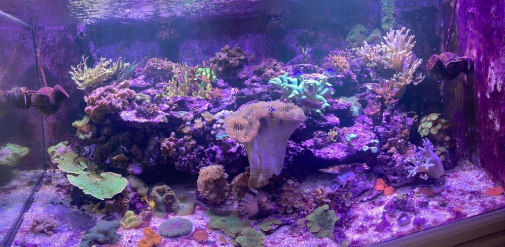 [PHOTO] Aquarium Récifale  Img_2626