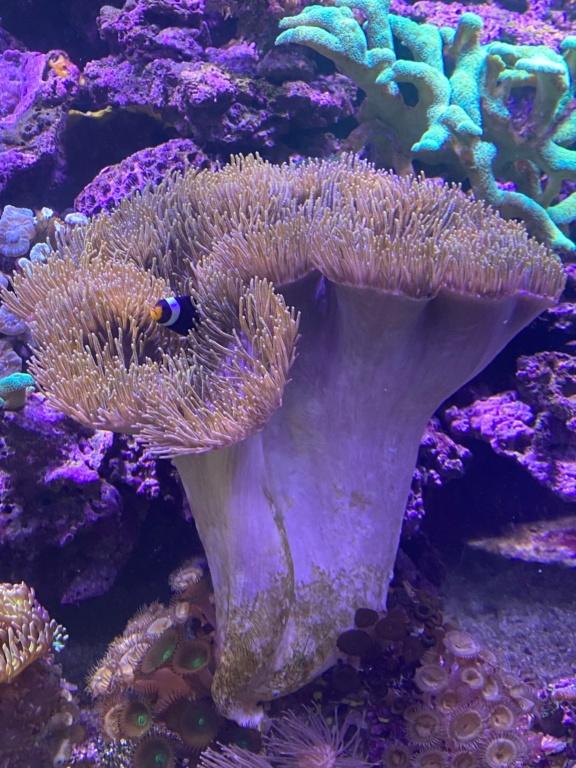 [PHOTO] Aquarium Récifale  Img_2627