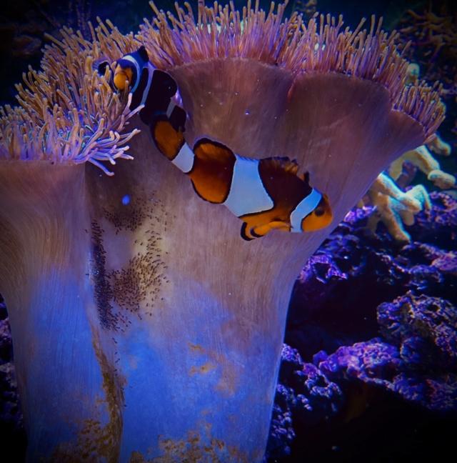 [PHOTO] Aquarium Récifale  - Page 2 Img_2628