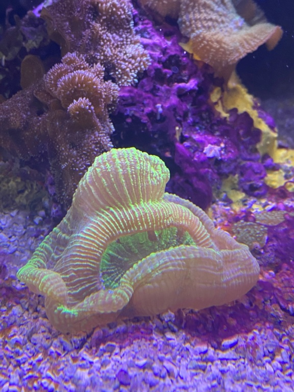 [PHOTO] Aquarium Récifale  Img_2711