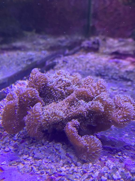 [PHOTO] Aquarium Récifale  Img_2712