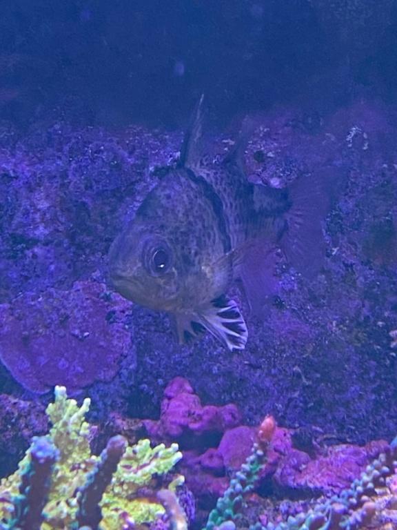 [PHOTO] Aquarium Récifale  Img_2715