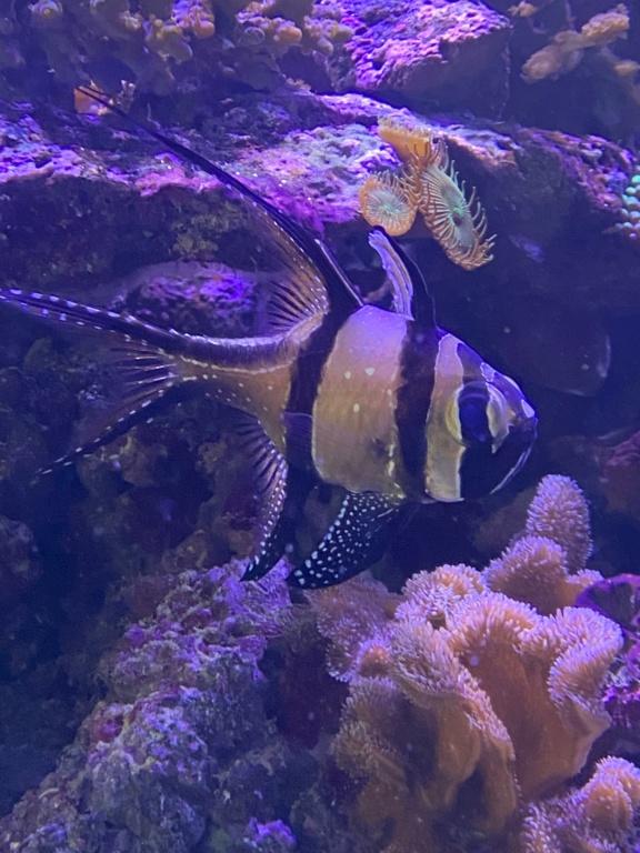[PHOTO] Aquarium Récifale  Img_2718