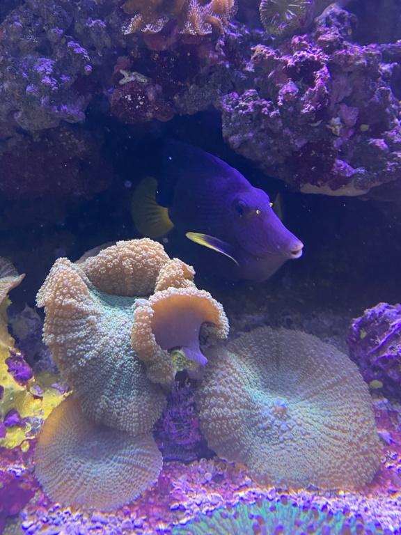 [PHOTO] Aquarium Récifale  Img_2719