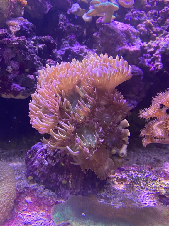 [PHOTO] Aquarium Récifale  Img_2720