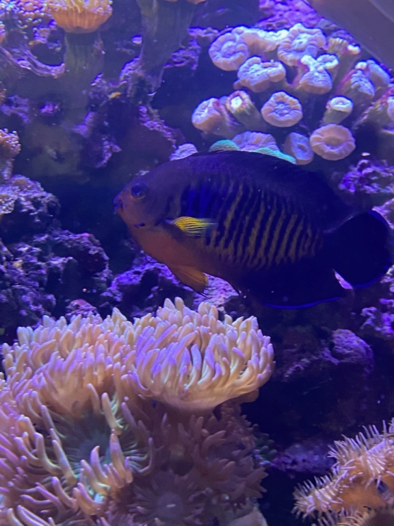 [PHOTO] Aquarium Récifale  Img_2721