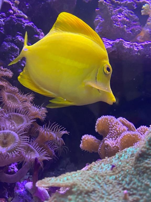 [PHOTO] Aquarium Récifale  Img_2722