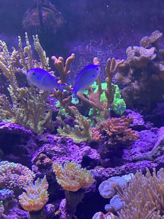 [PHOTO] Aquarium Récifale  Img_2723