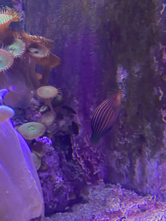 [PHOTO] Aquarium Récifale  Img_2724