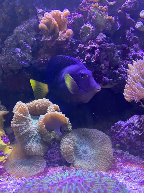 [PHOTO] Aquarium Récifale  Img_2725