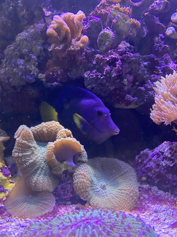 [PHOTO] Aquarium Récifale  Img_2726