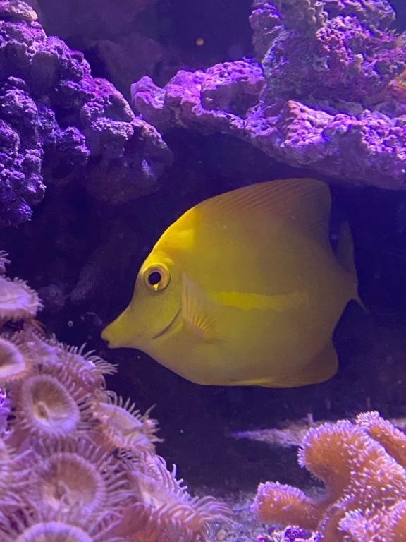 [PHOTO] Aquarium Récifale  Img_2727
