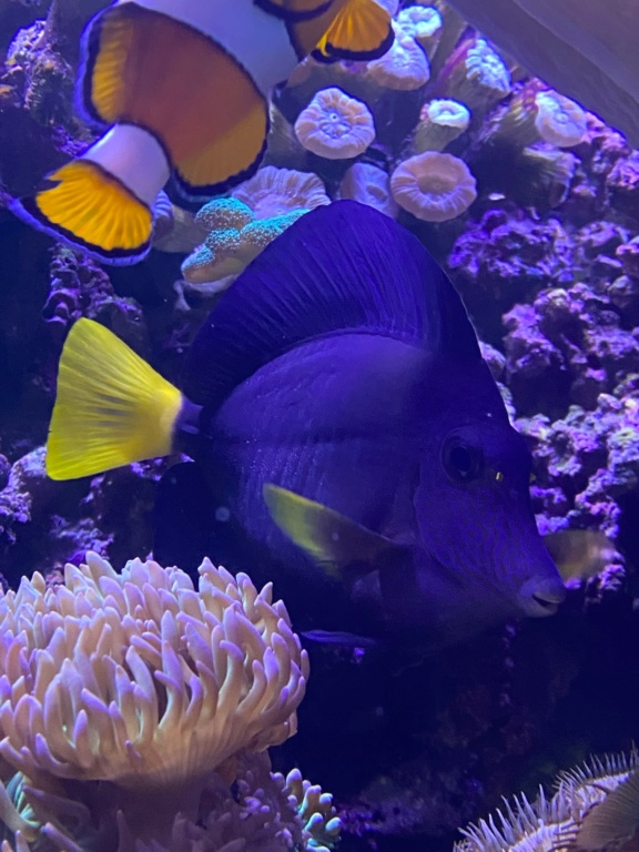 [PHOTO] Aquarium Récifale  Img_2728