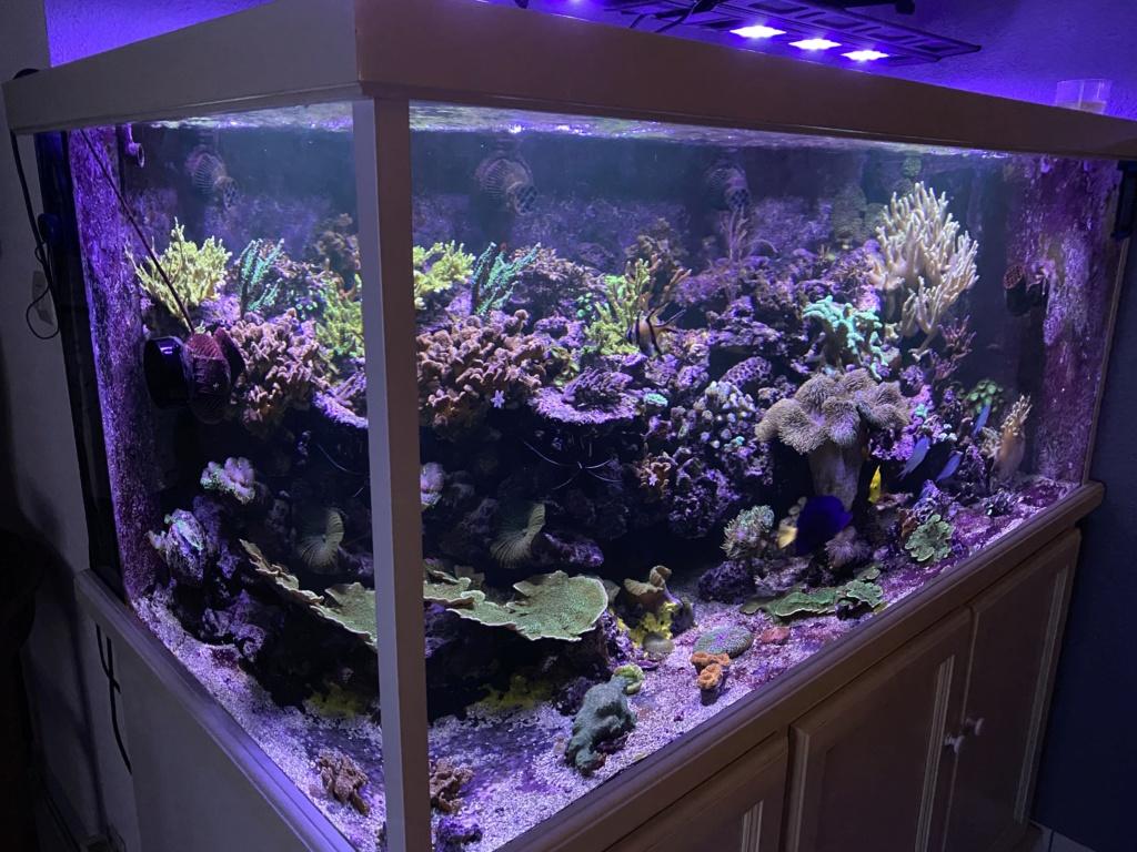 [PHOTO] Aquarium Récifale  - Page 2 Img_2912