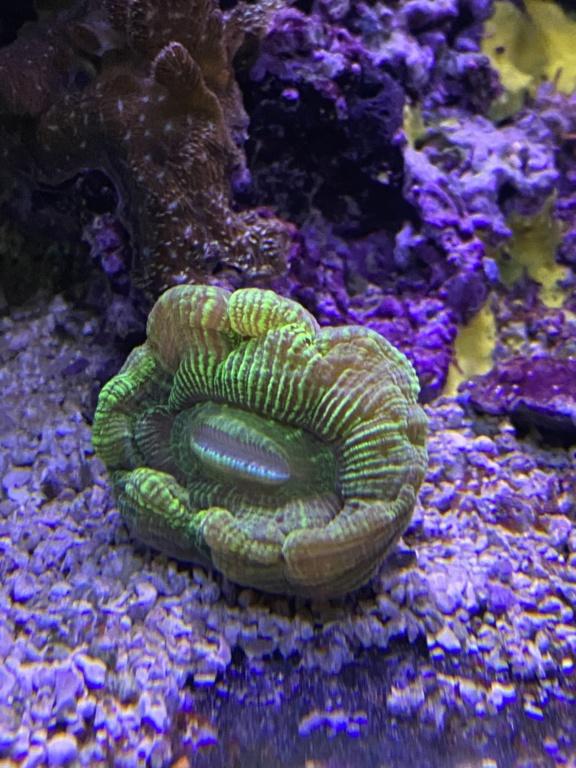 [PHOTO] Aquarium Récifale  - Page 2 Img_3011