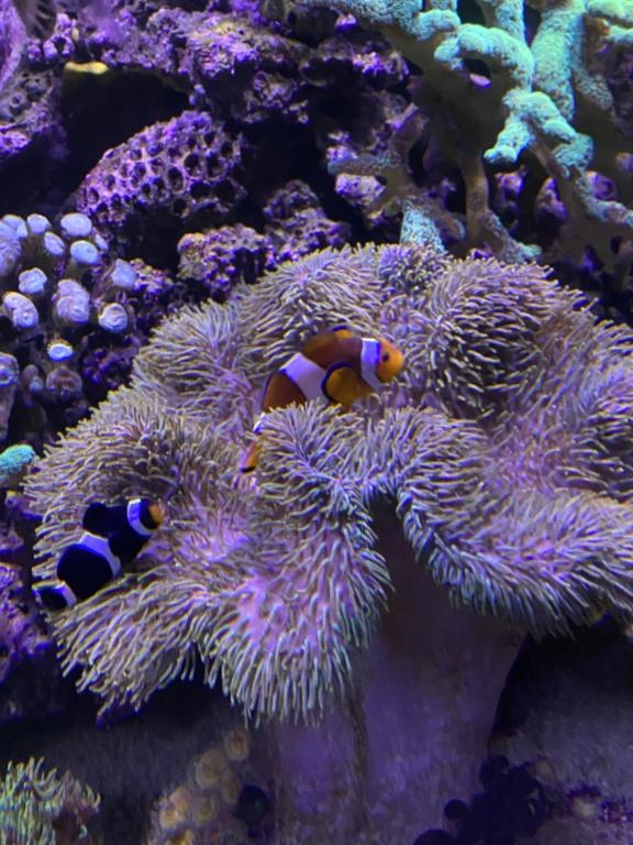 [PHOTO] Aquarium Récifale  - Page 2 Img_3013