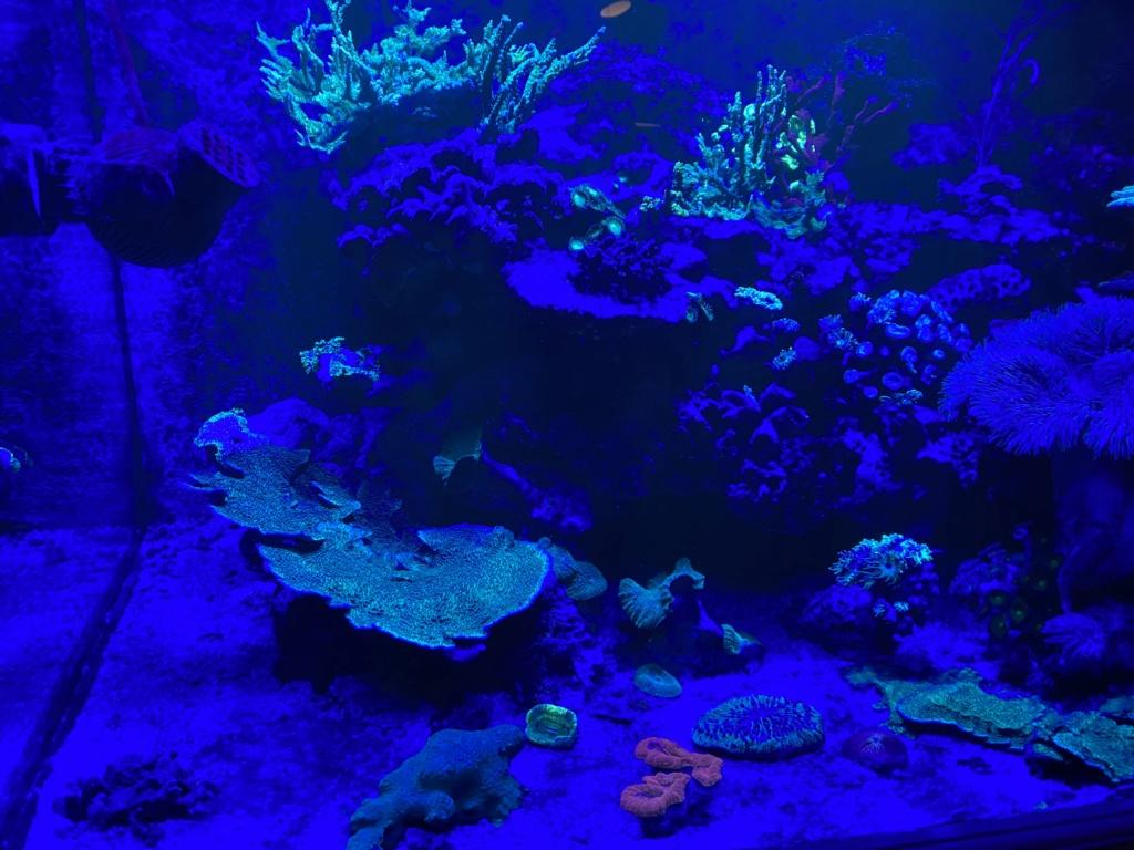 [PHOTO] Aquarium Récifale  - Page 2 Img_3014