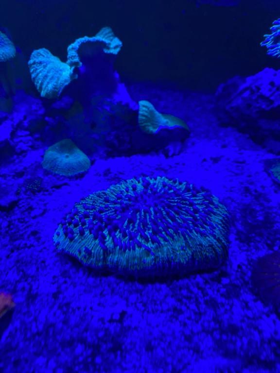 [PHOTO] Aquarium Récifale  - Page 2 Img_3015