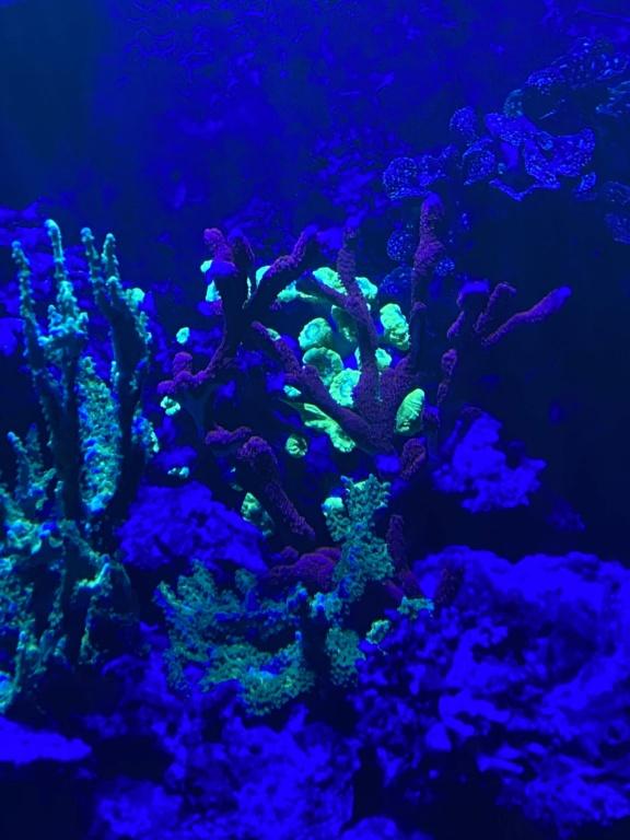 [PHOTO] Aquarium Récifale  - Page 2 Img_3016