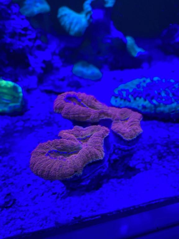 [PHOTO] Aquarium Récifale  - Page 2 Img_3018