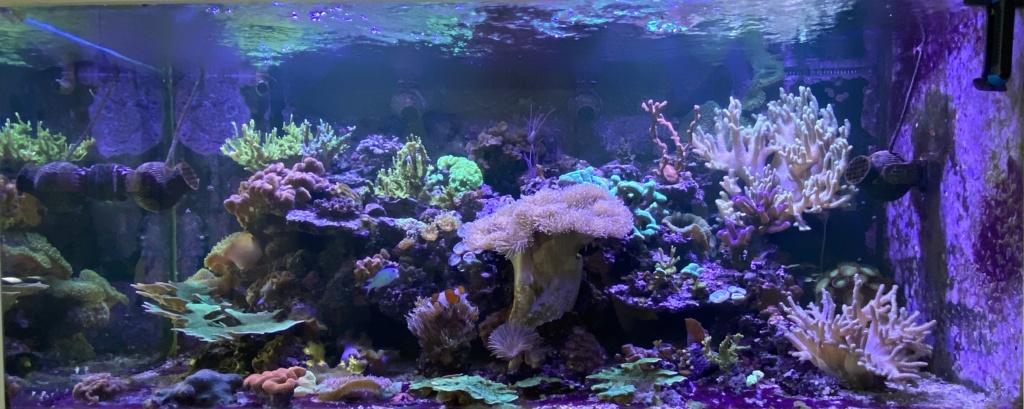 [PHOTO] Aquarium Récifale  - Page 4 Img_4019