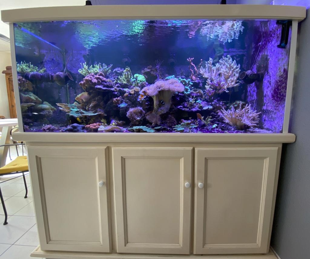 [PHOTO] Aquarium Récifale  - Page 4 Img_4021