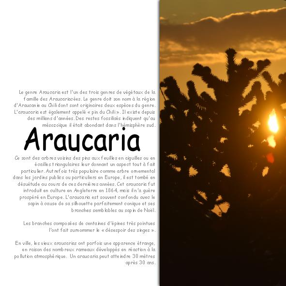 2019-52 / Challenge technique : templates - Page 2 Arauca12