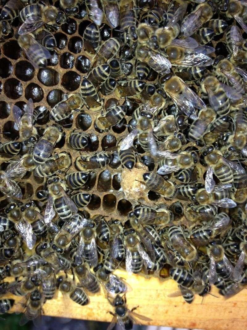 Pčelarstvo 111