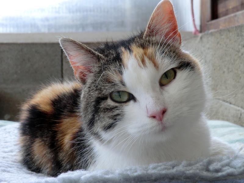 Lili - Tricolore, née en 2009 Cimg9144