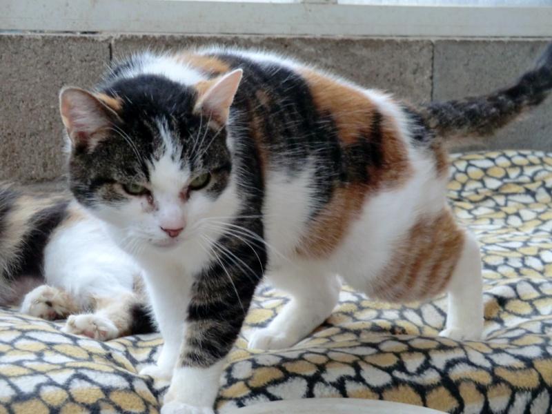 Méli - Tricolore - née en 2003 Cimg9260