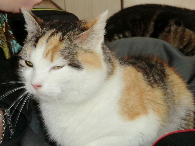 Lili - Tricolore, née en 2009 Cimg9336