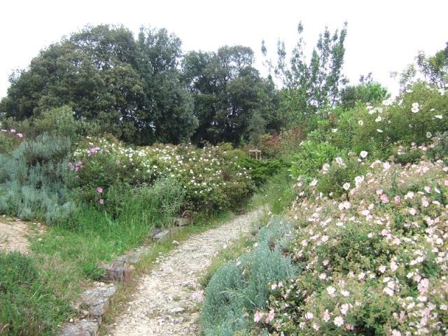 (17) La Rochelle - parcs et aménagements - Page 3 Dscf4627