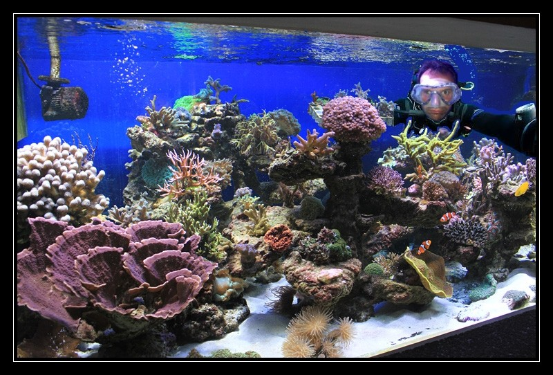 le reef tank d'harold - Page 37 Img74910
