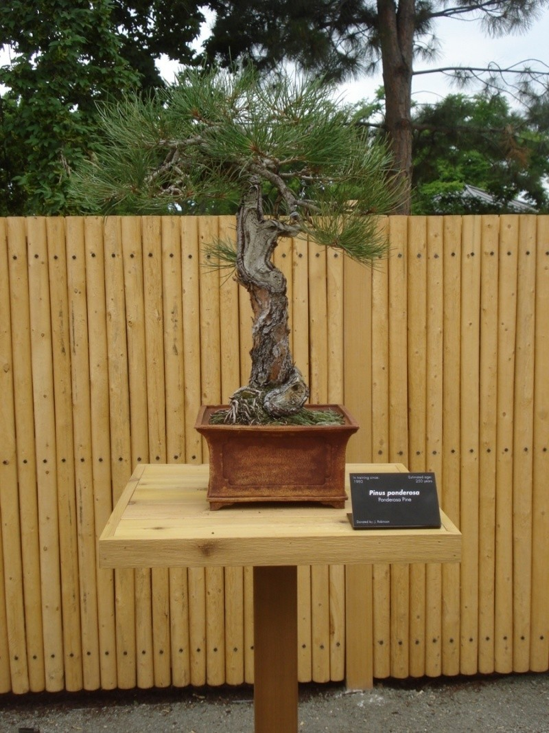 Stolen Bonsai - Denver Botanic Gardens Stolen10