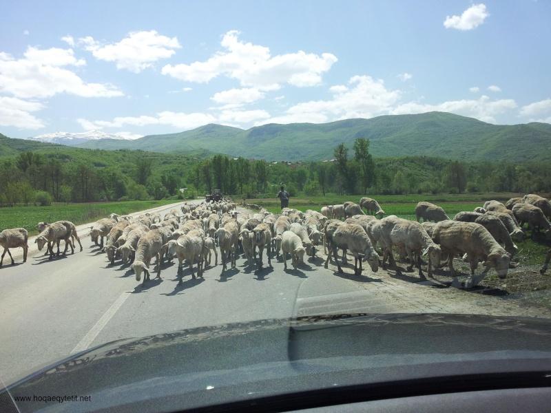 Rrugët e fshatit etj. (Prill 2013) 47861110