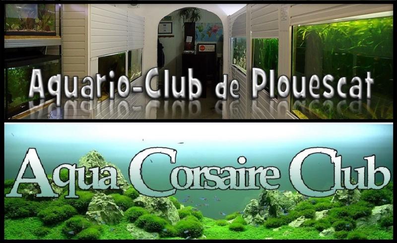 ACTIVITES CLUB AQUARIOPHILE DE PLOUESCAT 54381910