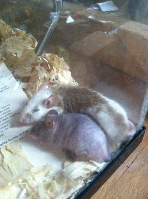 Interspecies love affair! Howard10