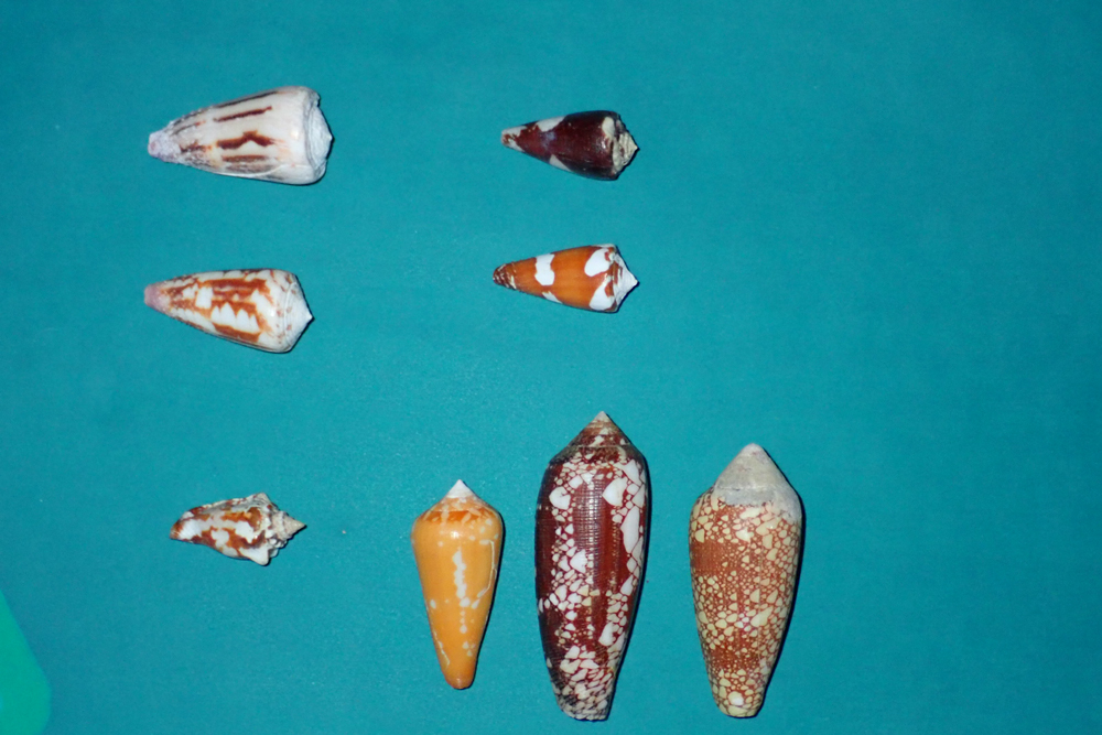 Identification de plusieurs cônes P1019210