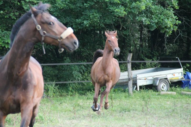 QUICKLY, poney New Forest PP, sauvé par Clémence64 !!!! (Mai 2013) - Page 2 Img_0912
