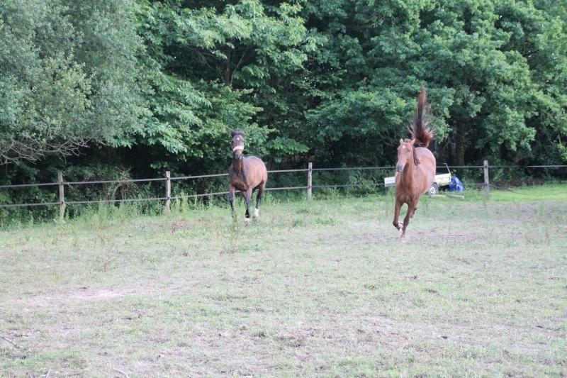 QUICKLY, poney New Forest PP, sauvé par Clémence64 !!!! (Mai 2013) - Page 2 Img_0913