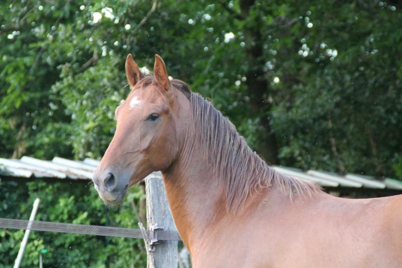 QUICKLY, poney New Forest PP, sauvé par Clémence64 !!!! (Mai 2013) - Page 2 Img_0916