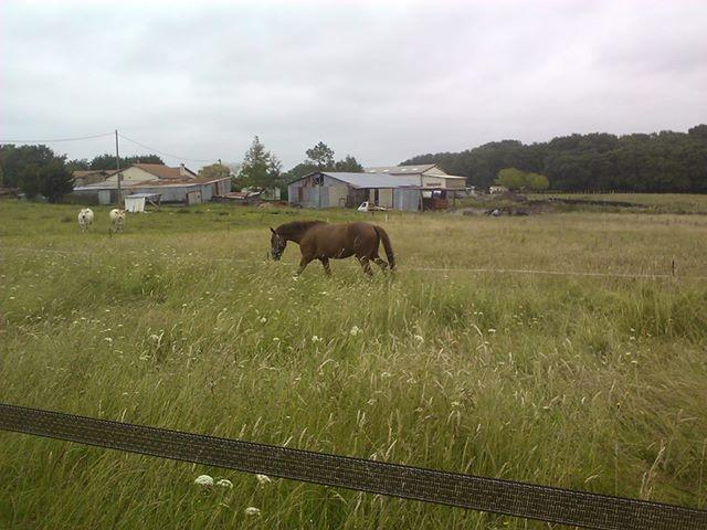 QUICKLY, poney New Forest PP, sauvé par Clémence64 !!!! (Mai 2013) - Page 2 Q10