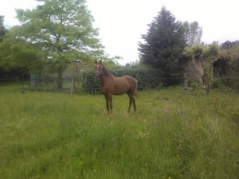 QUICKLY, poney New Forest PP, sauvé par Clémence64 !!!! (Mai 2013) Qui10