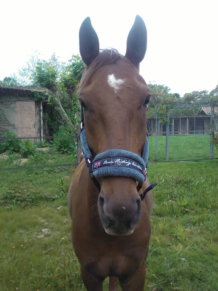QUICKLY, poney New Forest PP, sauvé par Clémence64 !!!! (Mai 2013) Qui410
