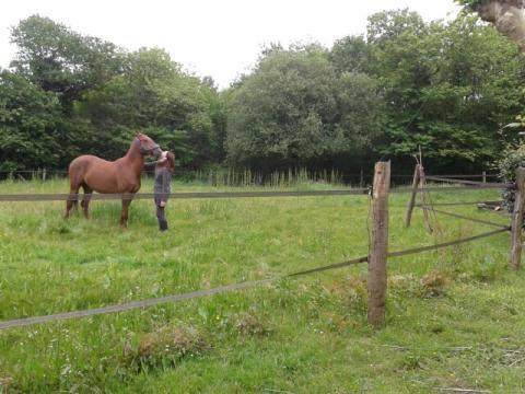 QUICKLY, poney New Forest PP, sauvé par Clémence64 !!!! (Mai 2013) Qui510