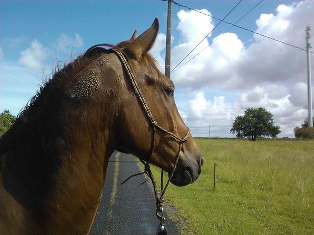 QUICKLY, poney New Forest PP, sauvé par Clémence64 !!!! (Mai 2013) - Page 2 Quic210